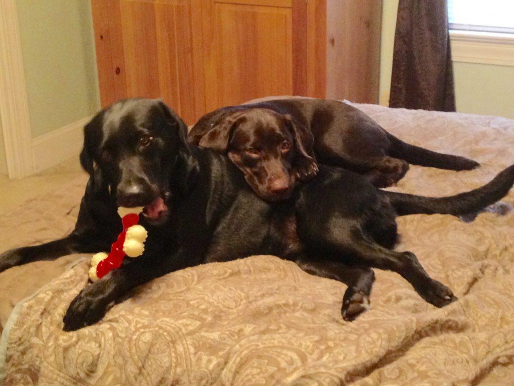 Duchess & Keely - Copy